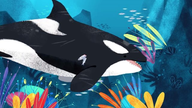 The expertise of killer whale grandmothers
