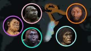 Seven Million Years of Human Evolution