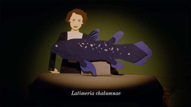 The Living Fossil Fish – Animated Life