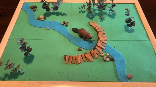 Beaver dams and wildfire, a stop-motion demonstration
