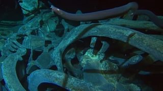 The deep-sea scavengers that feast on whale fall