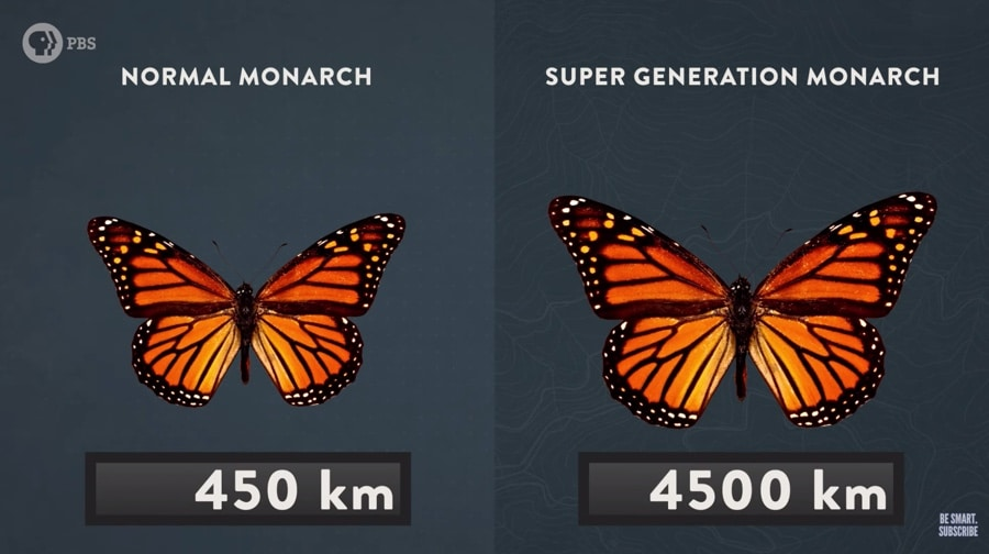 monarch super generation