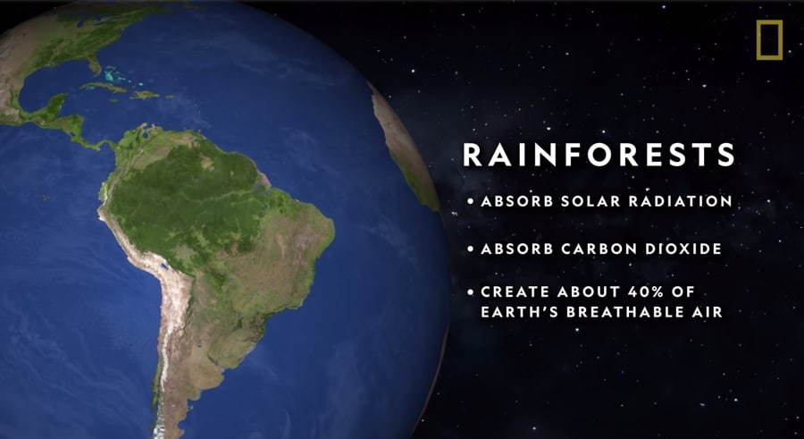 rainforest planetary benefits
