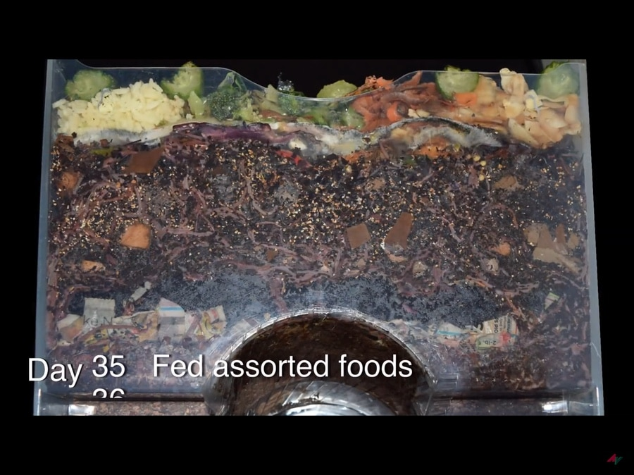 vermicomposting time lapse