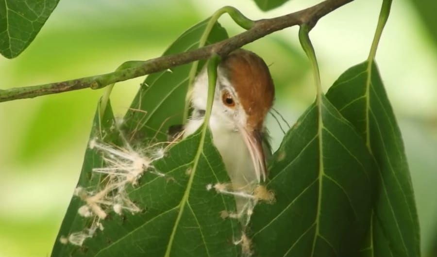 tailorbird sewing