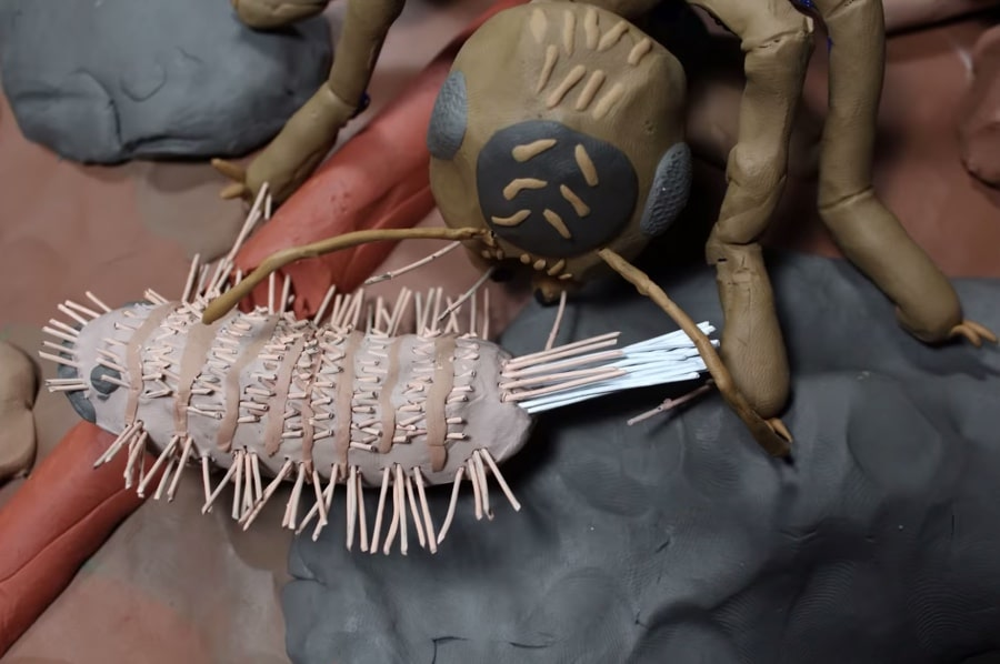 pincushion millipede defense mechanism