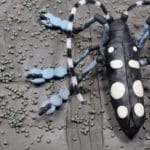 Asian longhorned beetles and spores