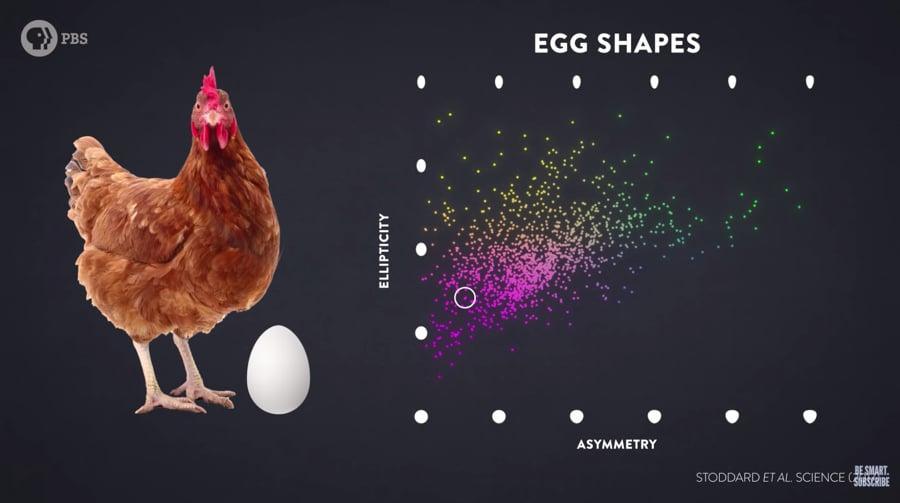 egg shapes - chart