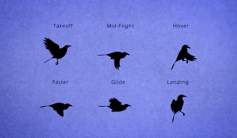 bird flight