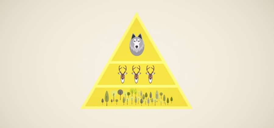 wolves may keep their ecosystems in balance