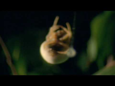 David Attenborough on Spiders, Mortality, and Nature's Resilience