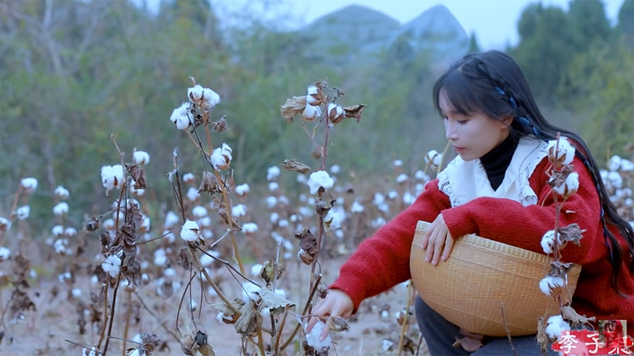 picking the cotton