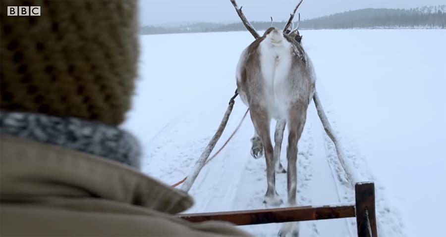 riding by reindeer