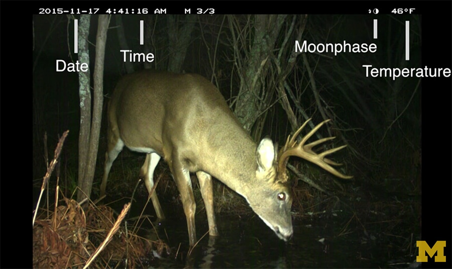 camera trap data - deer