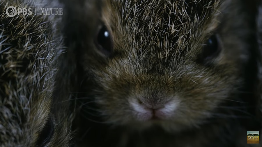 baby hare face