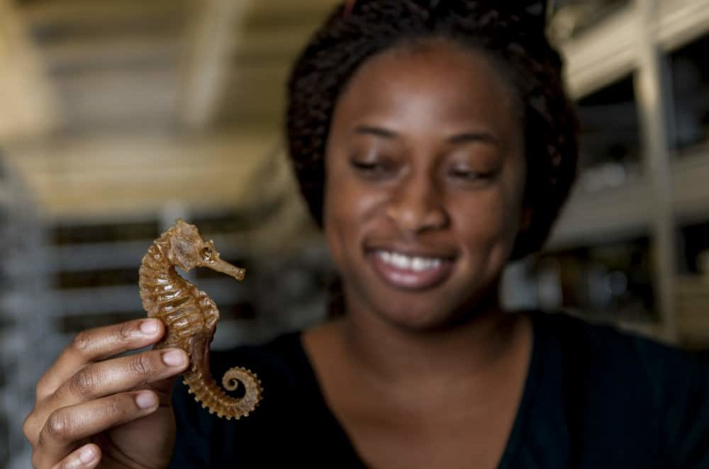 Adania Flemming with a seahorse