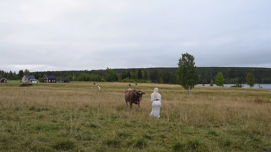 calling cows with Scandinavian song
