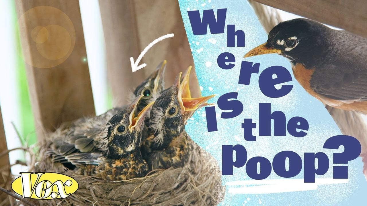 Why aren't bird nests covered in poop? | The Kid Should See This