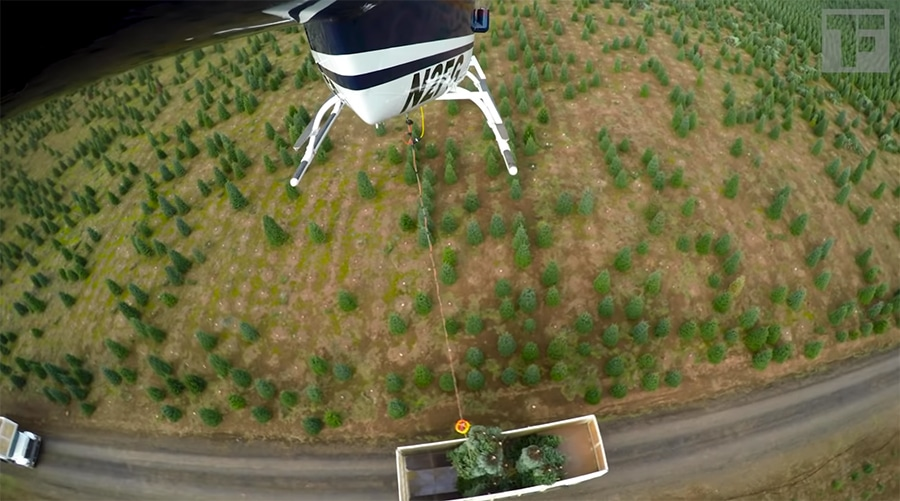 harvesting trees with a helicopter