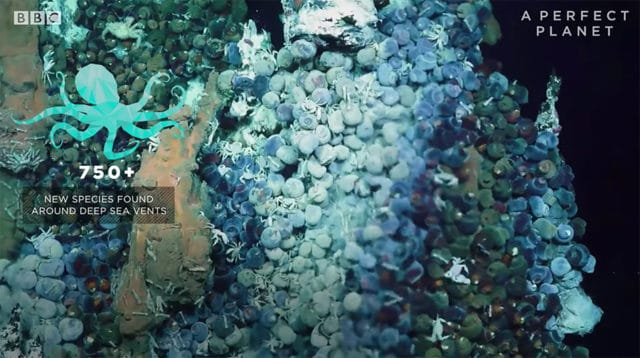 life around deep sea vents