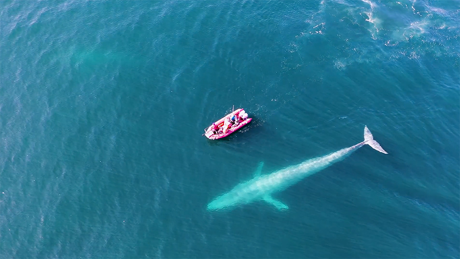 a boat and a blue whale