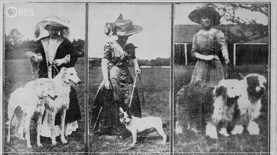 the Victorian expansion of dog breeds