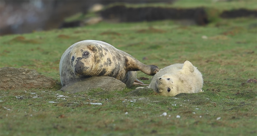 seal parent and child