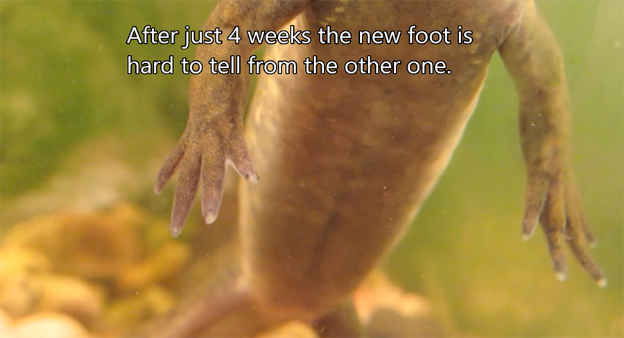 the foot after four weeks