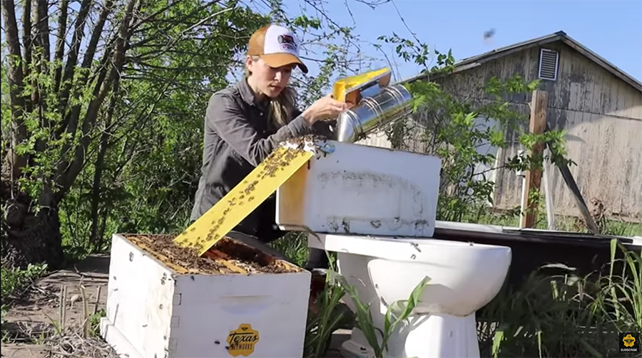 moving the bees