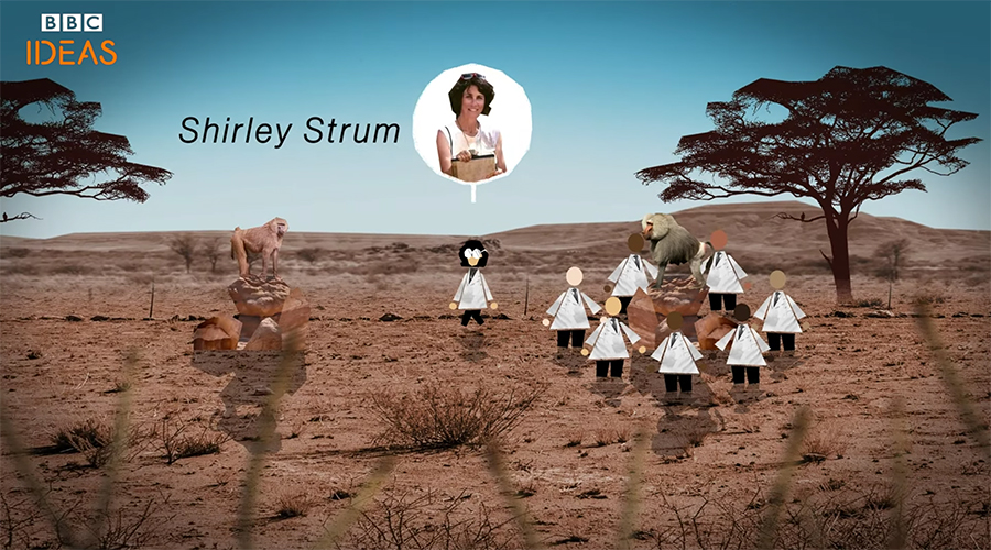 Shirley Strum's research breakthroughs