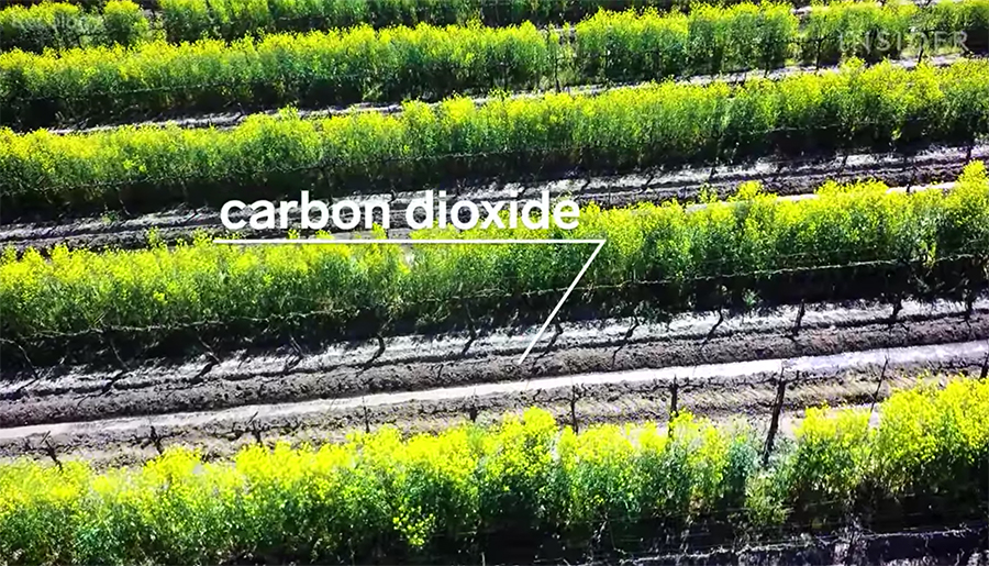 a carbon sink of sorts