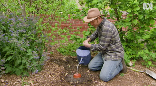 watering the olla clay pot