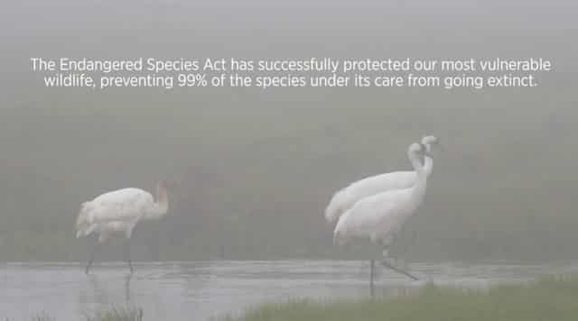conservation efforts for the whooping cranes